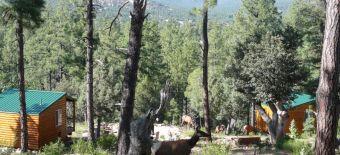 Retreats In Arizona Az Yoga Spiritual Growth And Health